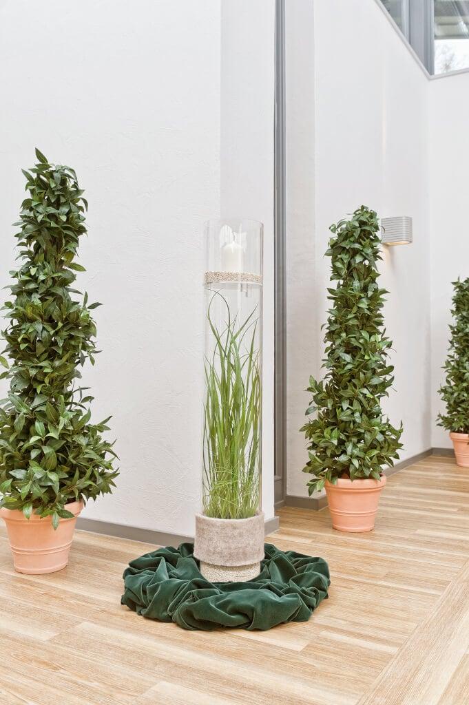 Pflanze Im Glas Dekoration